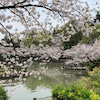 桜を見ながら「早く世の中が落ち着いて、皆様が平穏に暮らせますように」とお祈りしてきましたの画像
