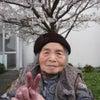 園庭の桜の画像