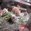 「多頭飼育対策ガイドライン」が発表されましたの画像