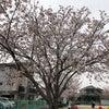 【鹿児島のアロマスクール】3月が終わるの画像