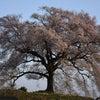 命 つながる(わに塚の桜)の画像