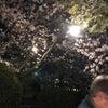 九華公園 夜桜の画像