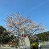 淡路島うめ丸☆温泉ランチの画像