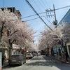 弘大(ホンデ)語学堂に春学期から入学された学生様のインタビュー!の画像