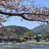 桜便り2021 京都・嵐山の画像