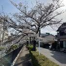 4/4西区の桜名所巡りのお知らせの記事より