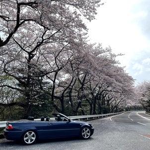 年度末の最終日にオープンカー花見で2021年の花見を締めくくる?!の画像