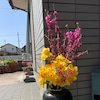 春満開【生きがいの郷デイサービス】の画像
