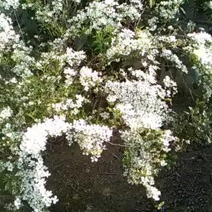 あ、家にも咲いていた・・・。の画像