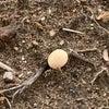 小さな畑 (枝豆の様子 2日目)の画像