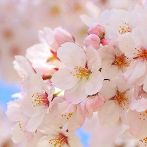 春こそ!ホットヨガの画像