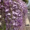 お花散歩で心の余裕を持ちましょう♪の画像