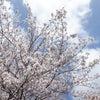 【4A病棟】お花見の画像