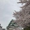 桜満開☆春は出会いの季節ですの画像