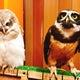 鳥のいるカフェのブログ