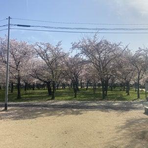 春が来ましたの画像