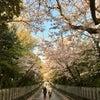 向日神社の桜の画像