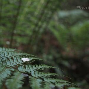 森のたからもの32の画像
