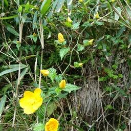 画像 春♪♪花いっぱ~い♪ の記事より 4つ目