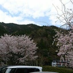 画像 春♪♪花いっぱ~い♪ の記事より 1つ目