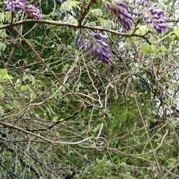 画像 春♪♪花いっぱ~い♪ の記事より 7つ目