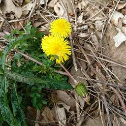 画像 春♪♪花いっぱ~い♪ の記事より 5つ目