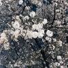 【桜といえば】の画像