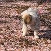 花びらの絨毯の画像