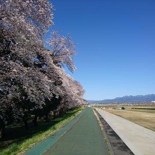 桜餅は4月4日までとなります。の画像