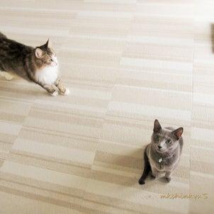 ~ 猫さん達と 病み上がりの飼い主 ~の画像