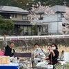 桜綺麗の画像