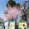 4月より、東邦音楽短期大学にて勤務します。の画像