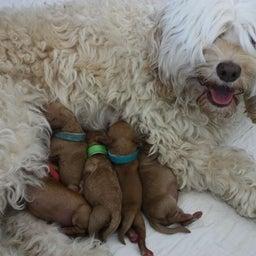 画像 Welcome to the world, puppies♪ の記事より 2つ目