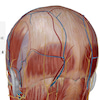 頭痛って何が原因?4人に1人が悩まされてる?の画像