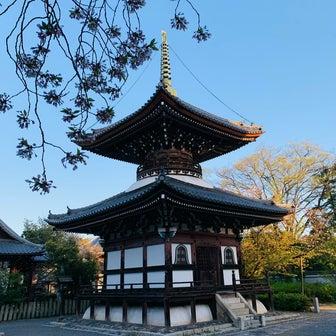 本法寺の名残り桜