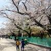春休み終わり!へとへとだけど、清々しい〜!の画像