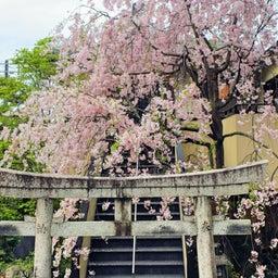 画像 【京都】只今春の特別拝観中‼️大本山妙顕寺塔頭「善行寺」でいただいたステキな【限定御朱印】 の記事より 6つ目