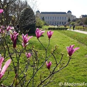 パリ春爛漫!癒しの庭園の画像