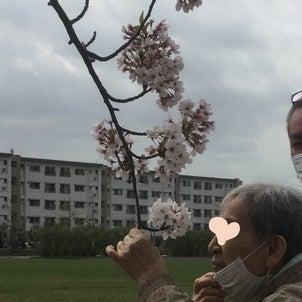 いなげ一倫荘 ドライブ花見に出かけてみた…の画像