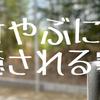 【妄想】建売の延長敷地が嵐山の竹林みたいだがね!の画像