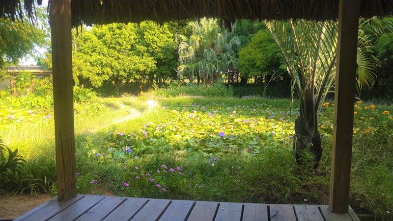 桃園観光レストラン莫內花園モネ庭園15