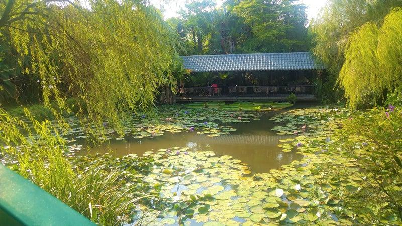 桃園観光レストラン莫內花園モネ庭園10