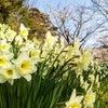 花盛りの新年度♪の画像