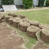芝生の撤去の画像