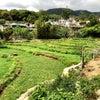 【荃灣】川龍村で飲茶からの城門引水道ハイキングコースの画像