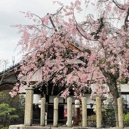 画像 【京都】秀吉が宿所にしていた日蓮宗大本山「妙顕寺」でいただいたステキな【限定御朱印】 の記事より 29つ目