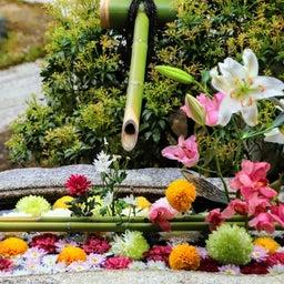 画像 【京都】秀吉が宿所にしていた日蓮宗大本山「妙顕寺」でいただいたステキな【限定御朱印】 の記事より 12つ目
