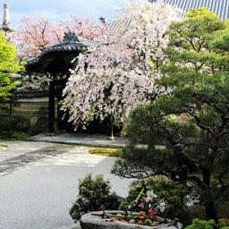 画像 【京都】秀吉が宿所にしていた日蓮宗大本山「妙顕寺」でいただいたステキな【限定御朱印】 の記事より 7つ目