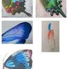 蝶の羽根から配色を学ぶの画像