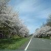 自衛隊、仙台大学、ロケットセンタア、と、続く並木通りの画像